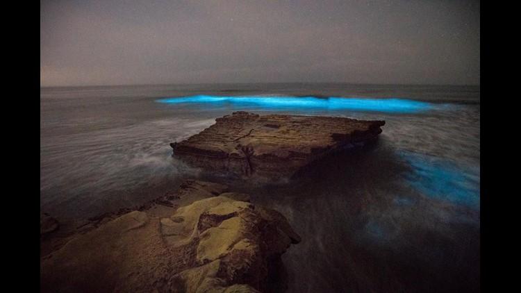 Bioluminescence 6