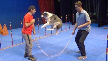 'Paw-tastic' Stunt Dog Show struts its stuff in Escondido