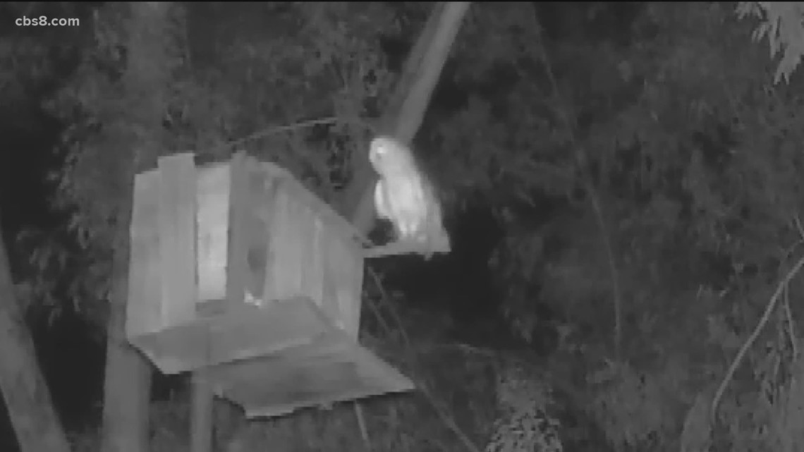 After 8 years, this 'owl hotel' finally gets some guests