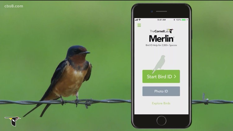 Merlin app makes identifying San Diego's vast bird species as easy as taking a photo