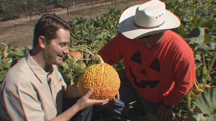Jeff's pumpkin