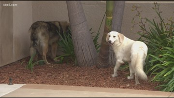 San Diego Humane Society rescues dogs from Iran