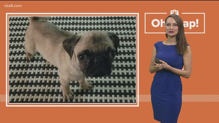 Oh Snap Pet pics!