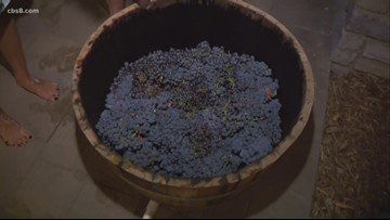 17th Annual Grape Stomp at Ponte Winery