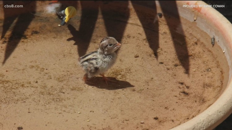 Putting water in your backyard can help animals during the drought