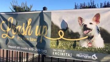 Concerns over leash rule violations in Encinitas