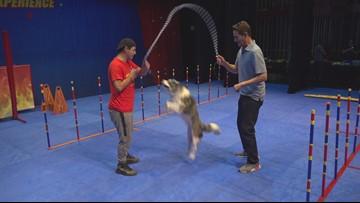Zevely Zone: Flying dog