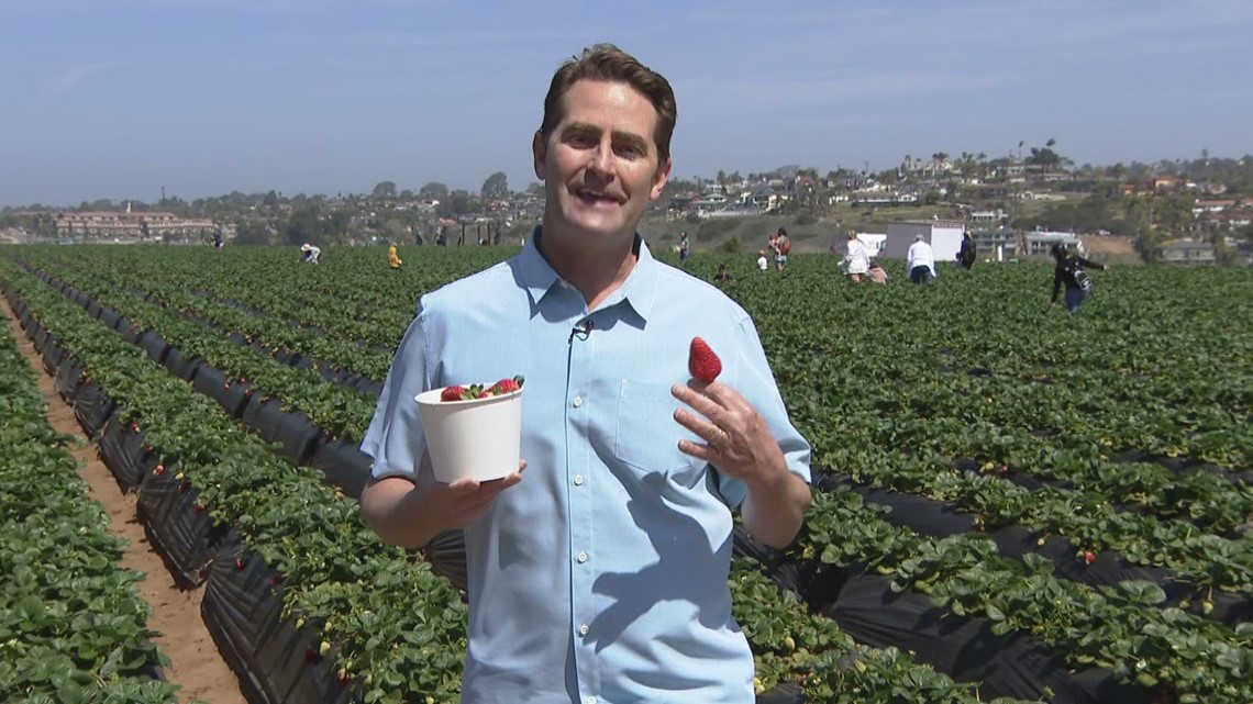 The Carlsbad Strawberry Company offers new attractions