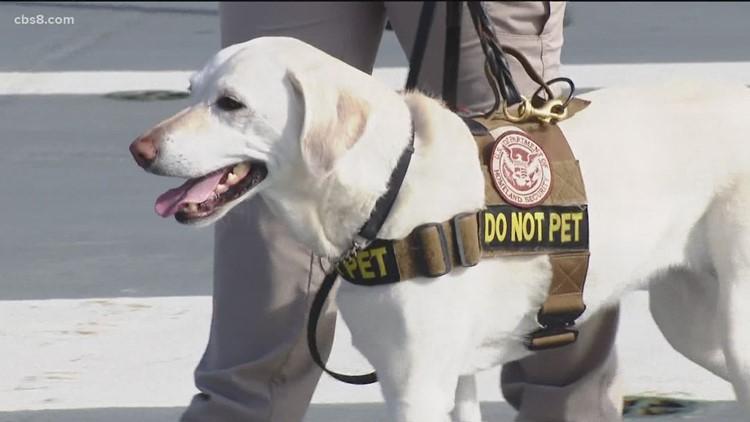 San Diego TSA dog retires after 6 years