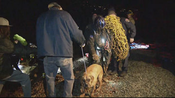 Crews rescue bullmastiff that fell into a ditch in University City