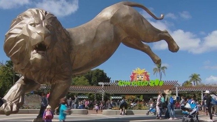 San Diego Zoo Unveils Colossal Bronze Lion Statue Cbs8 Com