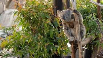 Need a break? Take a peek inside the San Diego Zoo