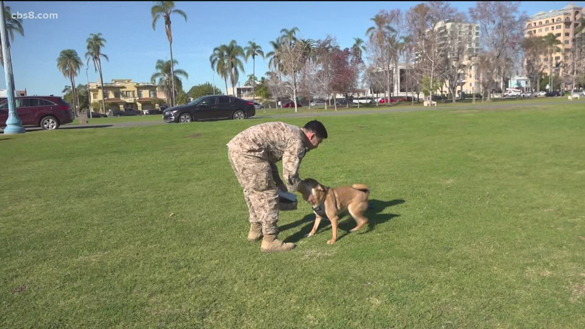 US Navy Petty Officer reunites with his dog after Iraq deployment