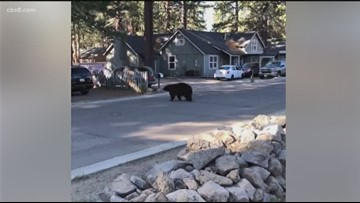 Wild Encounters: San Diego man hiking Pacific Crest Trail shares pictures of bear