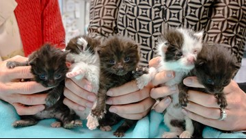 Kittens survive drive from Northern California to San Diego inside 60-foot steel column