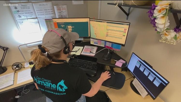 San Diego Humane Society adds 24/7 dispatch