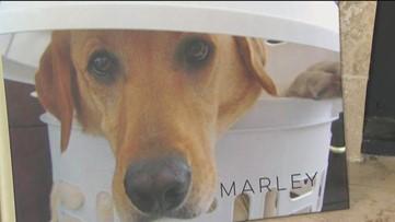Escondido family clones their beloved dog