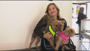 Beyond the Border: Americans save money on pet care in Tijuana