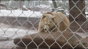 Thanksgiving Turkey Bash at Lions, Tigers & Bears