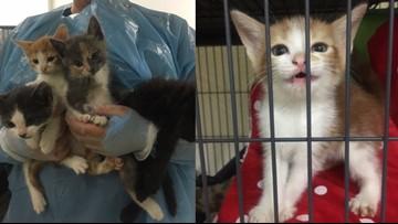 Flinstones family of kittens looking for their new bedrock