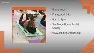 Bunny Yoga: De-stress after a long work week with some yoga, wine and bunnies!