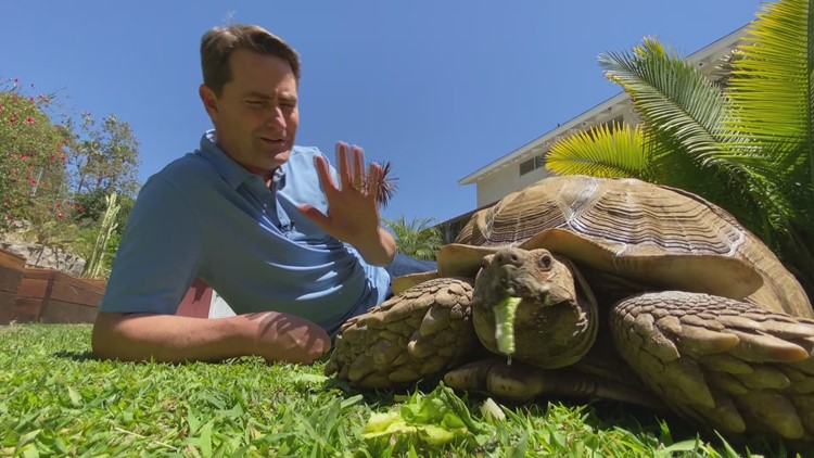 Turtles are the 'perfect pet' for people looking to slow things down