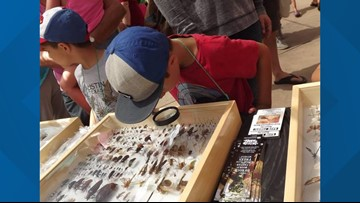 San Diego Botanic Garden hosts Insect Festival this weekend