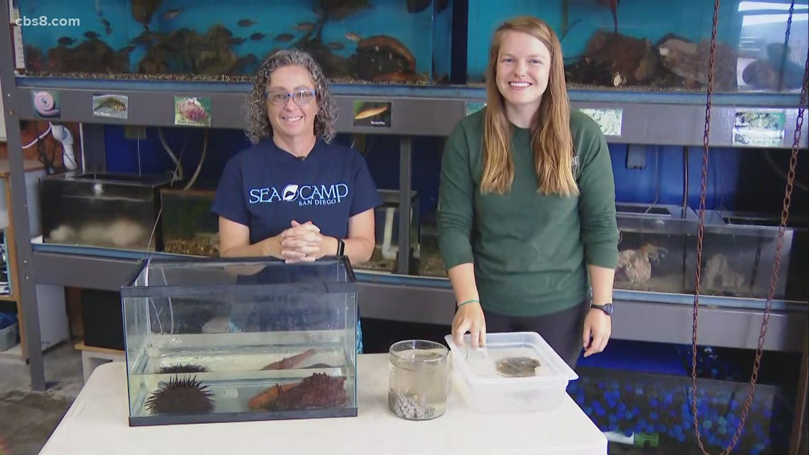 Seacamp San Diego holding hands-on educational camps