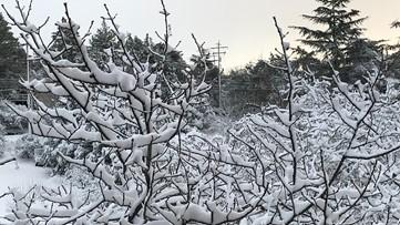 WATCH: Livestream of snow in Julian