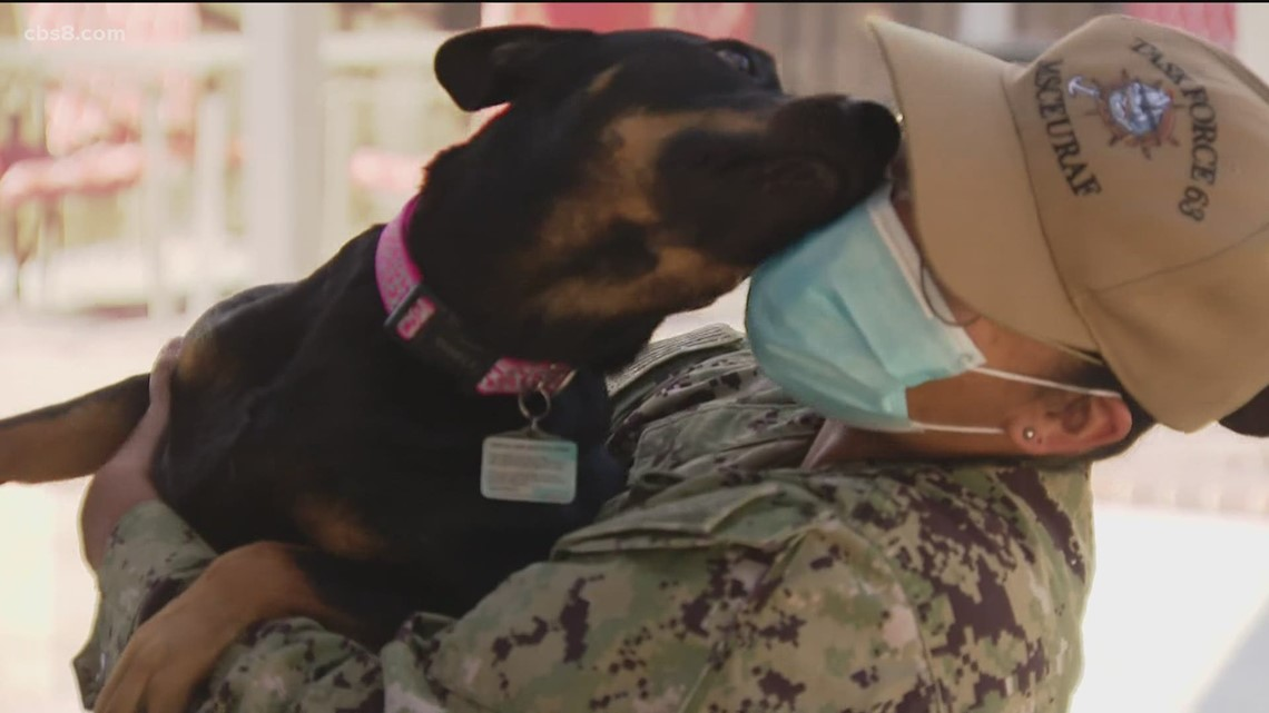 Dogs on deployment: San Diego Navy Sailor reunited with dog