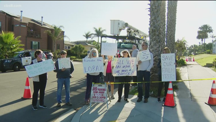 Sunset Cliffs residents protest in order to keep multiple palm trees from being cut down