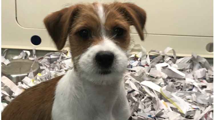 Voters may decide pet sale ban in National City