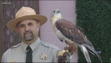 Celebrate 'Hawktober' at San Diego County parks