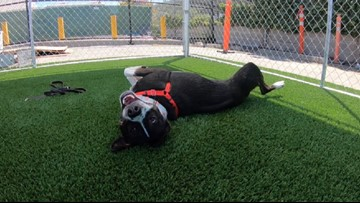 New Behavior Center is the only hope for hundreds of San Diego's most at-risk animals