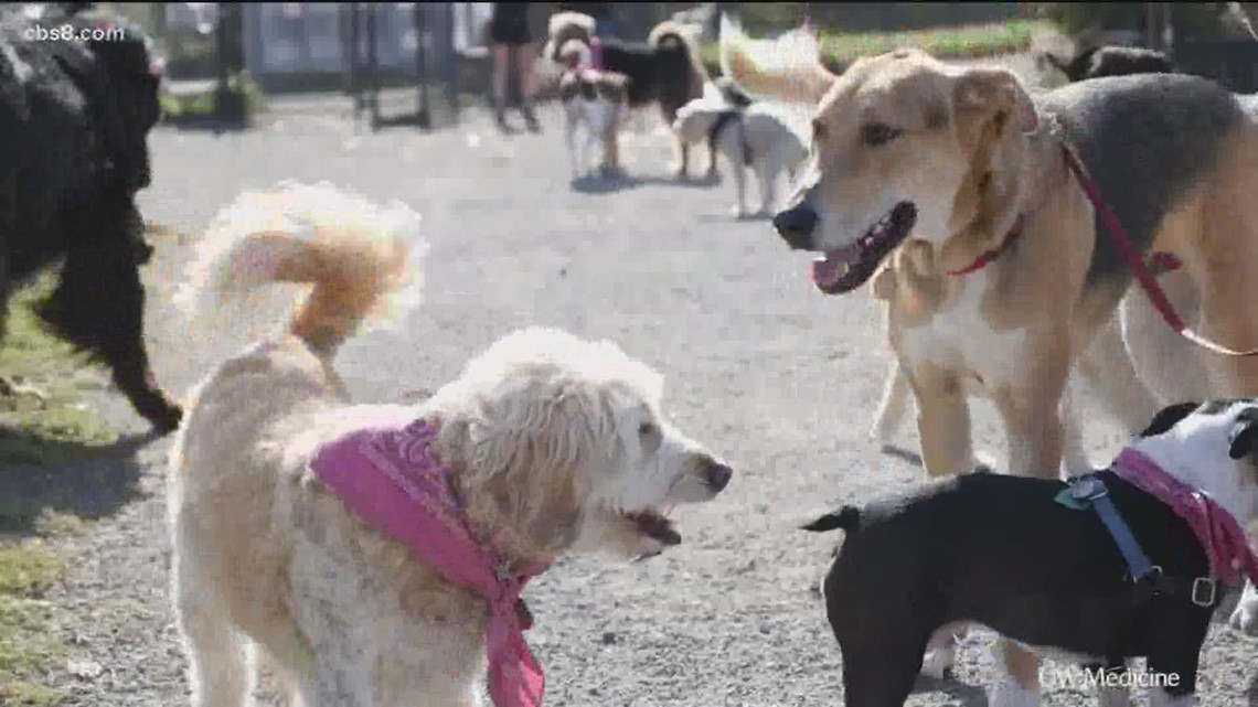 San Diego Humane Society urges locals to keep pets safe during heat wave