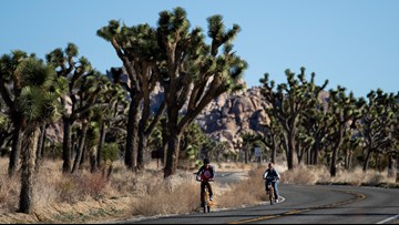 Conservationists seek protection of California Joshua trees