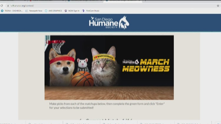 March Meowness is the purr-fect competition for pet lovers