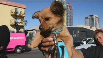 Helen Woodward Animal Center gives some love to homeless people and their pets