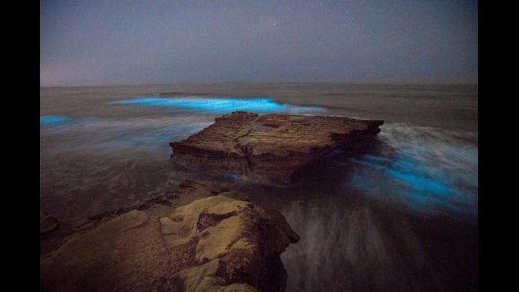 Bioluminescence 3