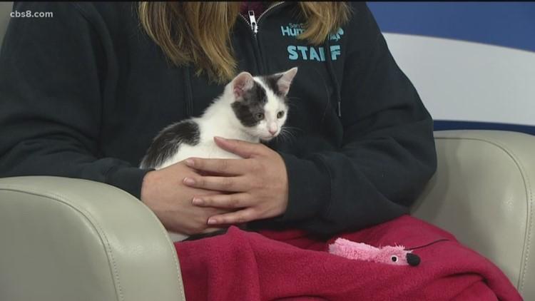 Humane Society running cat adoption special through weekend