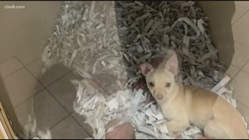 Can this puppy store in Escondido be shut down?