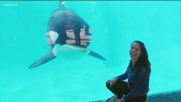 Milkin' San Diego: Inside look at SeaWorld