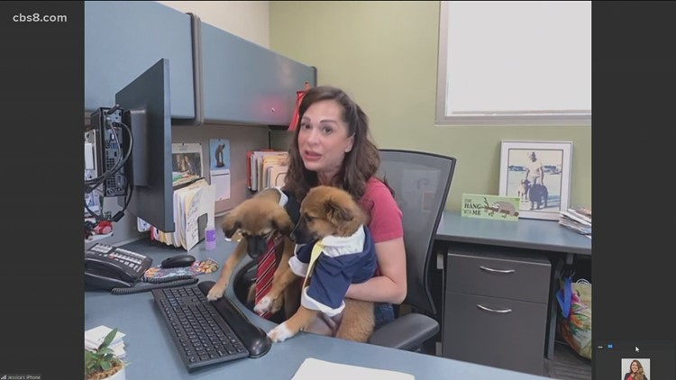 What you need to know about 'Take Your Dog to Work Day' on June 25