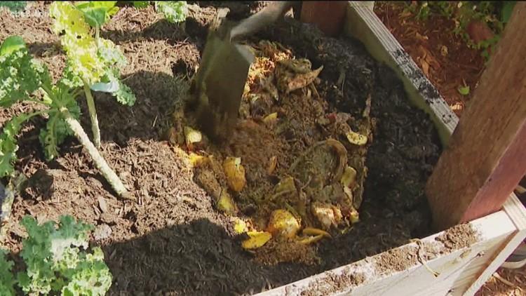 'Zero Waste Family' shares food waste strategy
