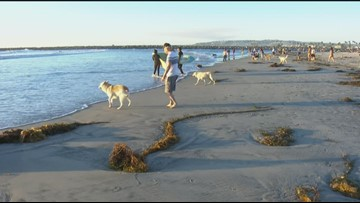 Water bacteria advisory at Dog Beach in Ocean Beach