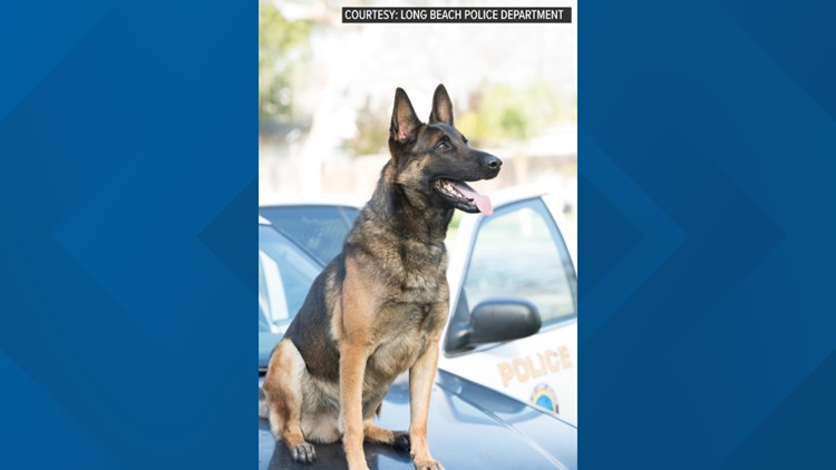 Long Beach police dog death was heat-related