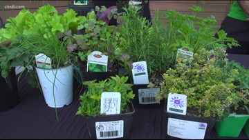 Winter planting, prepping & planning: Tips to keep your garden growing