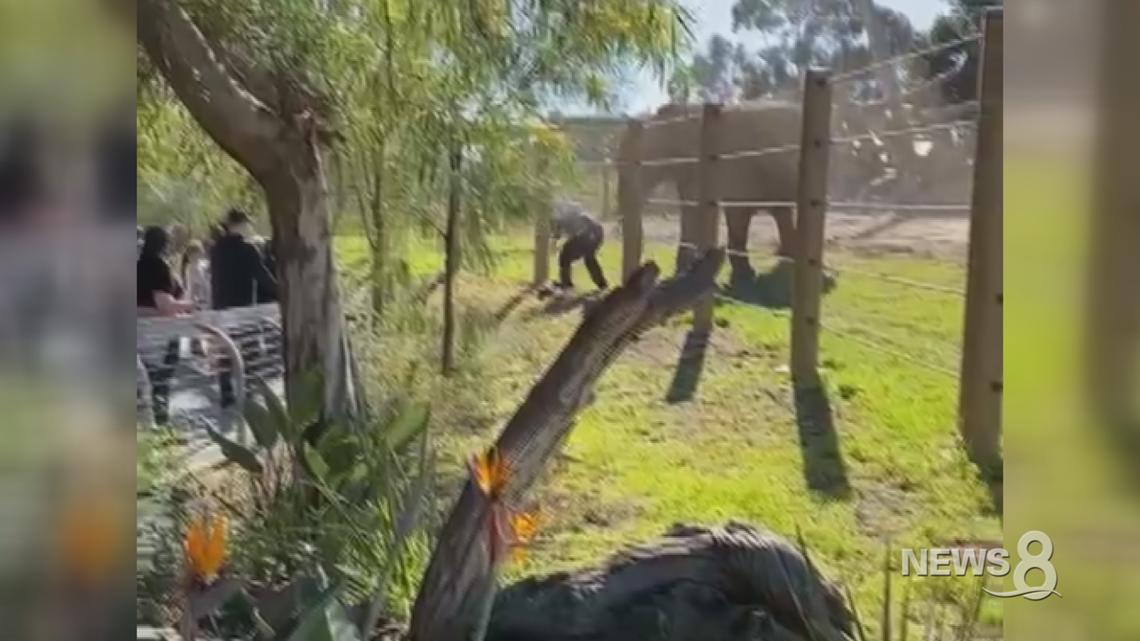 Man enters elephant enclosure at San Diego Zoo