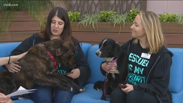 North County dog lovers getting together for 'Walk For Animals'