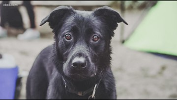 Grain free dog food linked to heart condition
